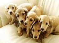 宠物狗的好养程度排行