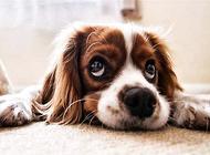 有这些症状,狗狗就是生病了。