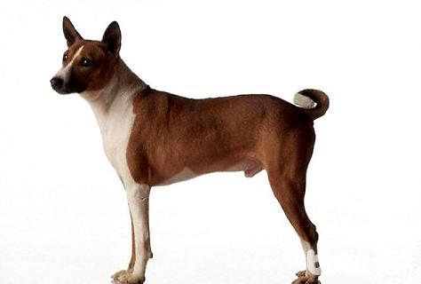 十大蠢狗排名