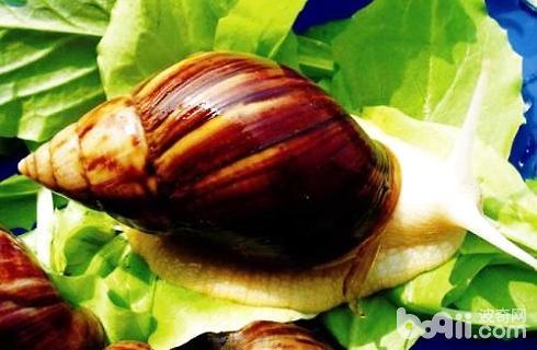 白玉蜗牛1.jpg