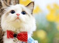 猫除了猫粮还能吃什么?猫饮食注意事项