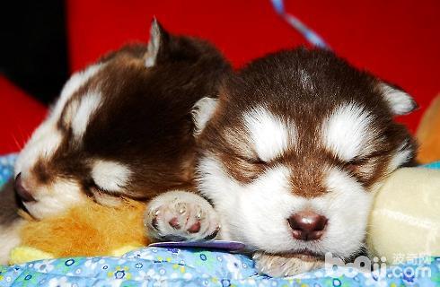 幼犬1.jpg