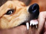 狗感染狂犬病多久会死?