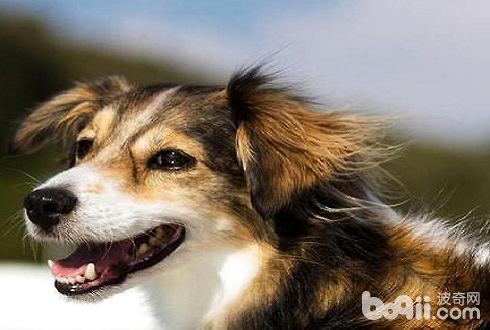 狗感染狂犬病多久会死