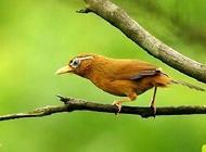 宠物鸟种类有哪些?宠物鸟价格介绍