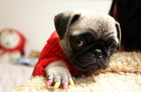 怎么给狗剪指甲