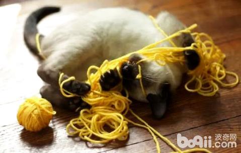 猫为什么爱玩毛线球
