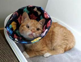 猫角膜炎怎么治疗