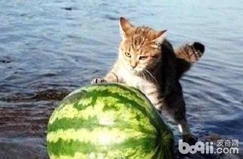 吸猫是什么意思