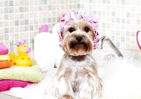 狗多久洗一次澡