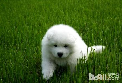 最萌宠物十大排名,最萌的狗狗介绍