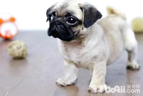 狗缺钙吃什么