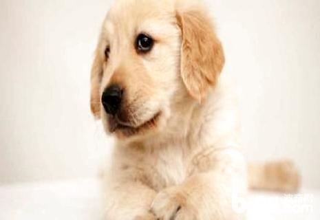 犬瘟后期有什么症状