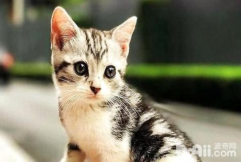 养猫需要准备什么