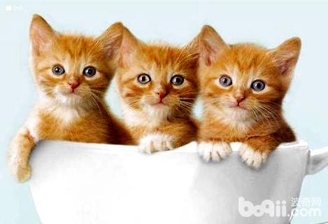 迷你猫多少钱一只