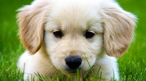 训练宠物狗