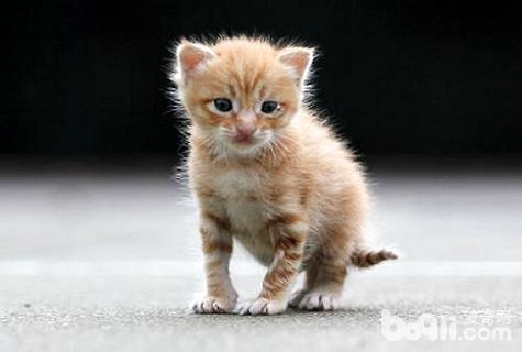 幼猫吃什么