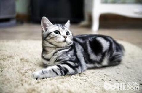 猫发情有什么表现