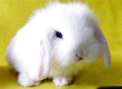 小白兔的生活习性