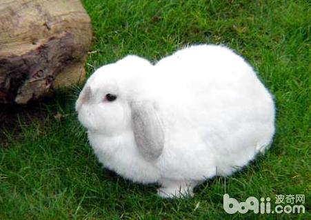 兔子有什么习性?小白兔的生活习性-轻博客