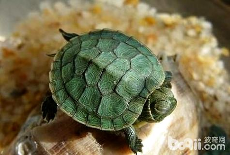 小乌龟眼睛睁不开