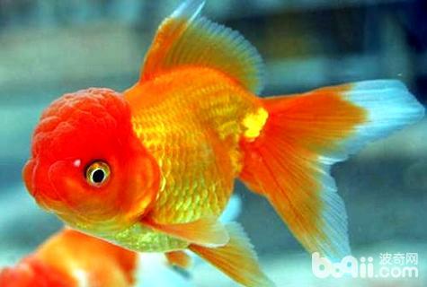 养金鱼几天换一次水