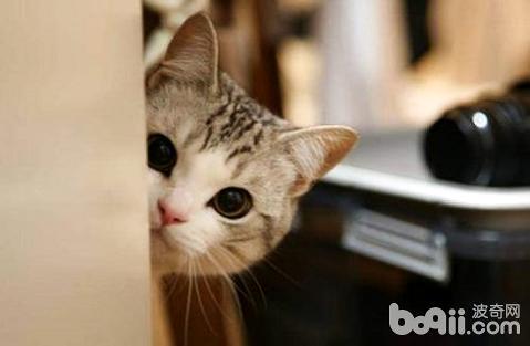 猫不爱喝水图片