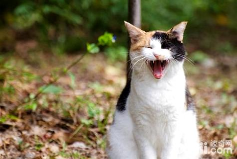猫咪不爱喝水怎么回事图片