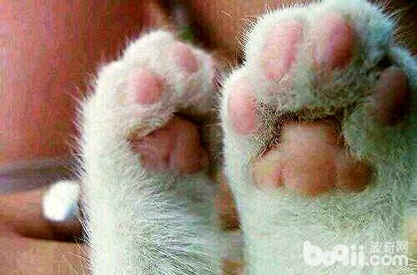 被猫咪抓了会得猫爪热吗?