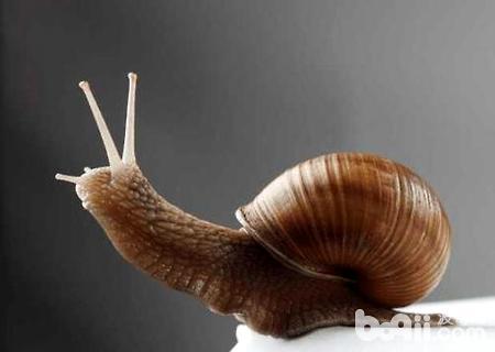 蜗牛是益虫还是害虫