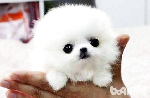 小狗刚生出来需要补钙吗?