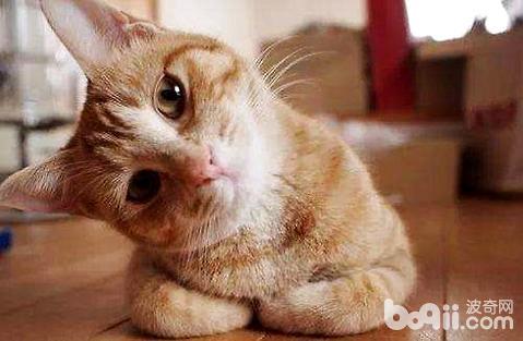 猫咪严重便秘要怎么应对?