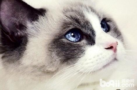 猫咪为什么可以长时间不眨眼睛?