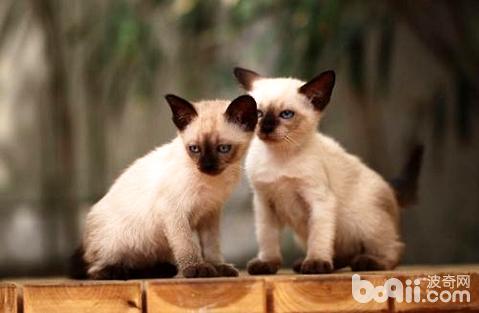 刚出生的小猫应该怎么照顾喂养?