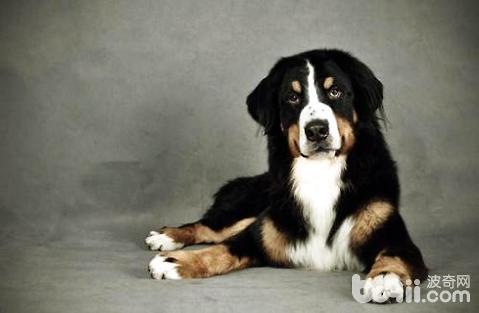 狗狗受伤了可以自己舔伤口吗?