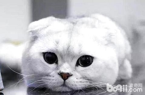 猫咪除了吃猫粮需要额外的补充营养吗?