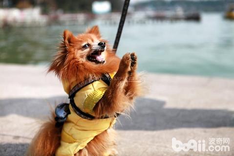 为什么流浪狗比家养的狗身体更好?