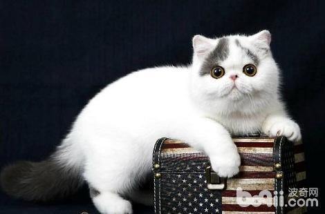 你家猫会拒绝梳毛吗?