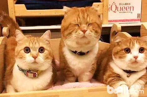 猫咪得了猫鼻支会死吗?