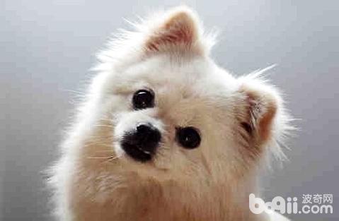 狗狗为什么会严重掉毛?