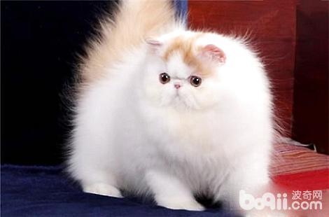什么情况下猫咪才需要吃营养膏?
