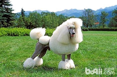 狗狗太瘦可以吃营养膏增肥吗?