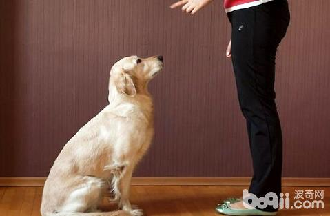 狗狗积食怎么进行调节?