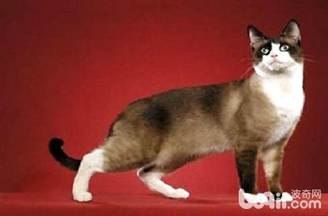 猫咪便秘可以喝牛奶吗?