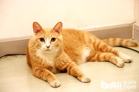 没消化的猫粮被猫咪呕吐出来了怎么办?