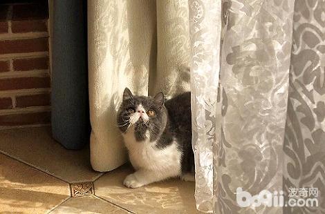 猫咪在拉稀,可以进行驱虫吗?