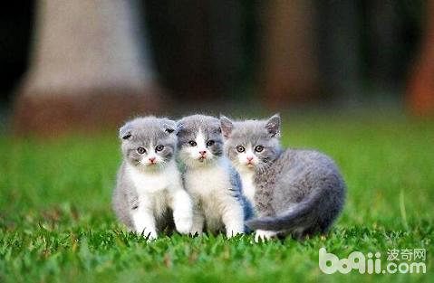 刚出生小奶猫要怎么喂养?