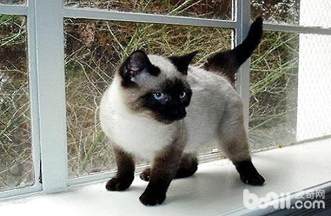 小奶猫没长牙要吃什么?