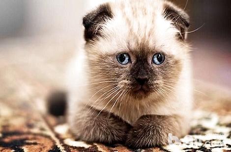 人吃的维生素可以给猫咪吃吗?
