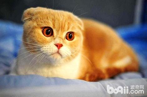 猫鼻支和猫疱疹病毒有什么区别?